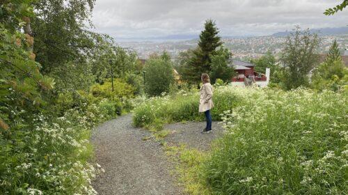 Kari-Anne Rørstad
